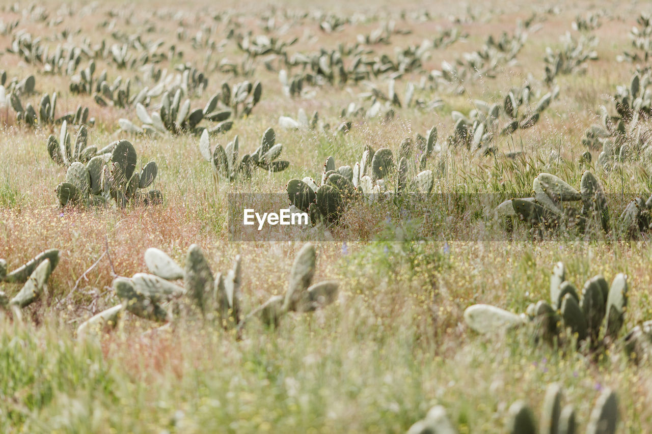 plant, land, growth, selective focus, nature, field, day, no people, landscape, environment, grass, beauty in nature, group of animals, large group of animals, outdoors, animals in the wild, animal wildlife, animal, animal themes, tranquility, herd, arid climate