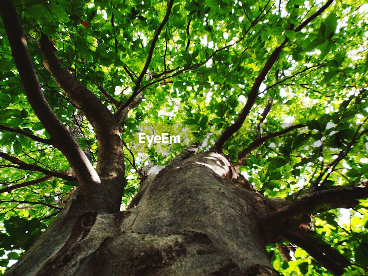 tree, tree trunk, growth, low angle view, branch, nature, green color, day, no people, outdoors, beauty in nature, close-up