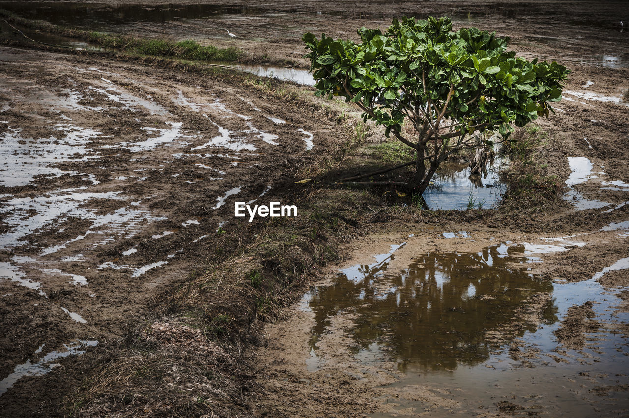High Angle View Of Tree Growing On Wet Muddy Field