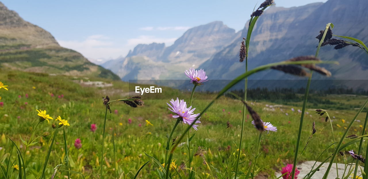 plant, beauty in nature, flower, flowering plant, growth, freshness, vulnerability, fragility, land, nature, field, petal, close-up, green color, no people, focus on foreground, mountain, tranquility, flower head, landscape, pink color, outdoors