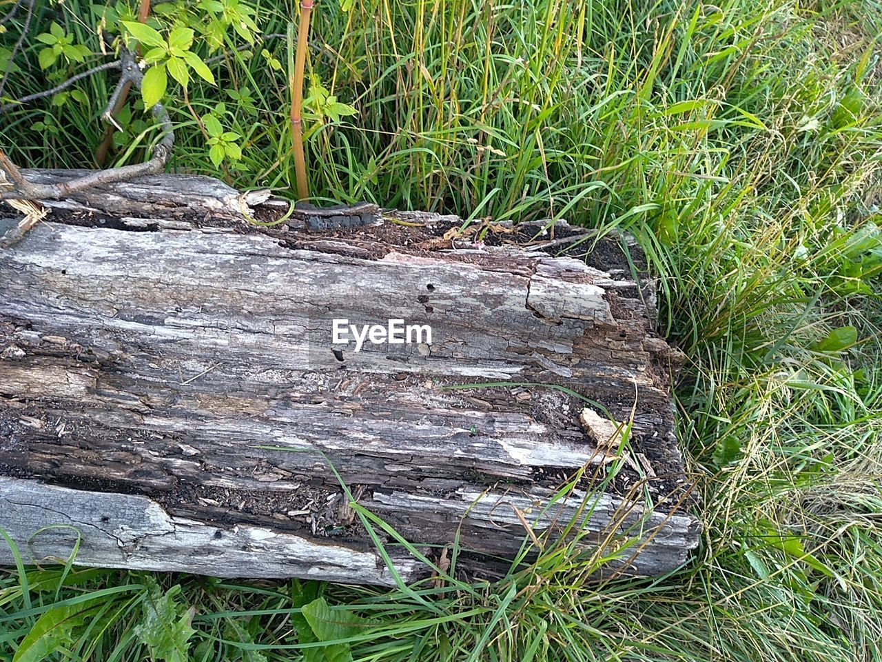 CLOSE-UP OF LOG ON FIELD