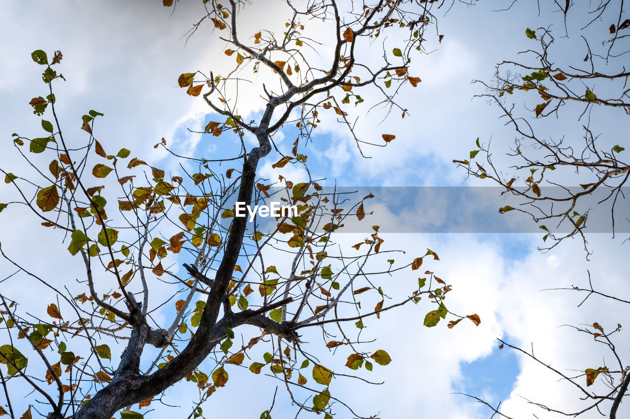 low angle view, sky, plant, tree, branch, growth, beauty in nature, cloud - sky, no people, day, nature, tranquility, outdoors, flower, leaf, sunlight, flowering plant, plant part, scenics - nature, twig