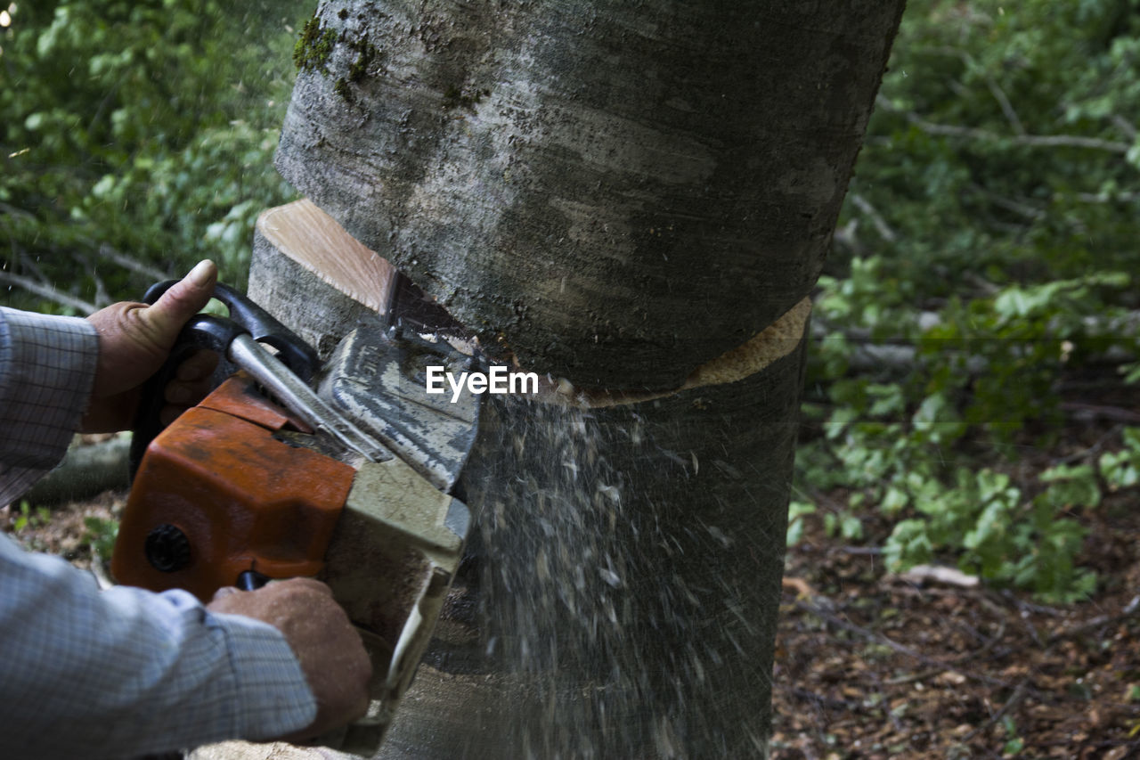 Cropped Image Of Man Sawing Wood At Forest