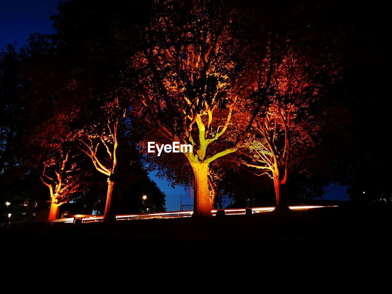 tree, plant, illuminated, night, nature, no people, growth, motion, outdoors, city, transportation, glowing, architecture, branch, orange color, long exposure, street, sky, silhouette, road