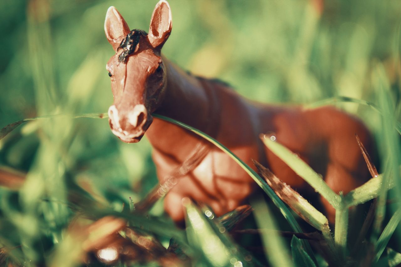 one animal, mammal, animal themes, grass, day, nature, no people, animals in the wild, outdoors, domestic animals, close-up
