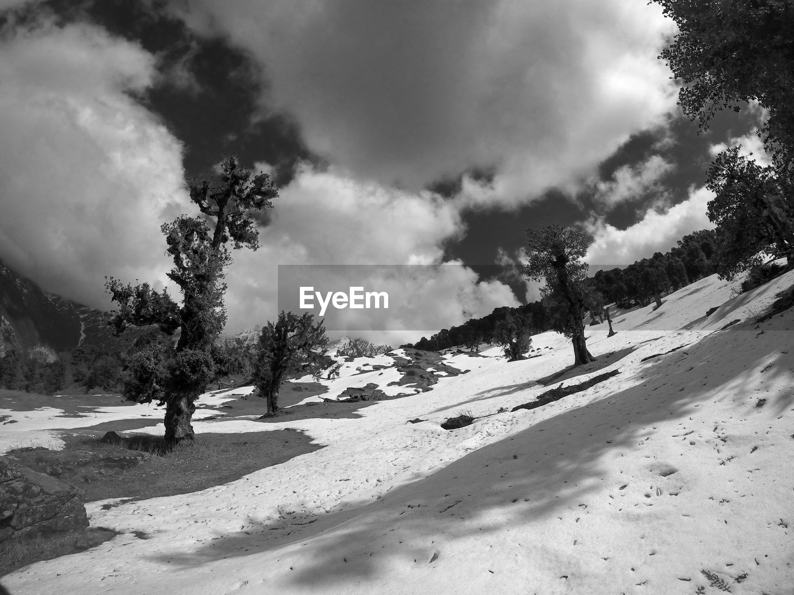 TREES ON SNOWCAPPED FIELD AGAINST SKY DURING WINTER