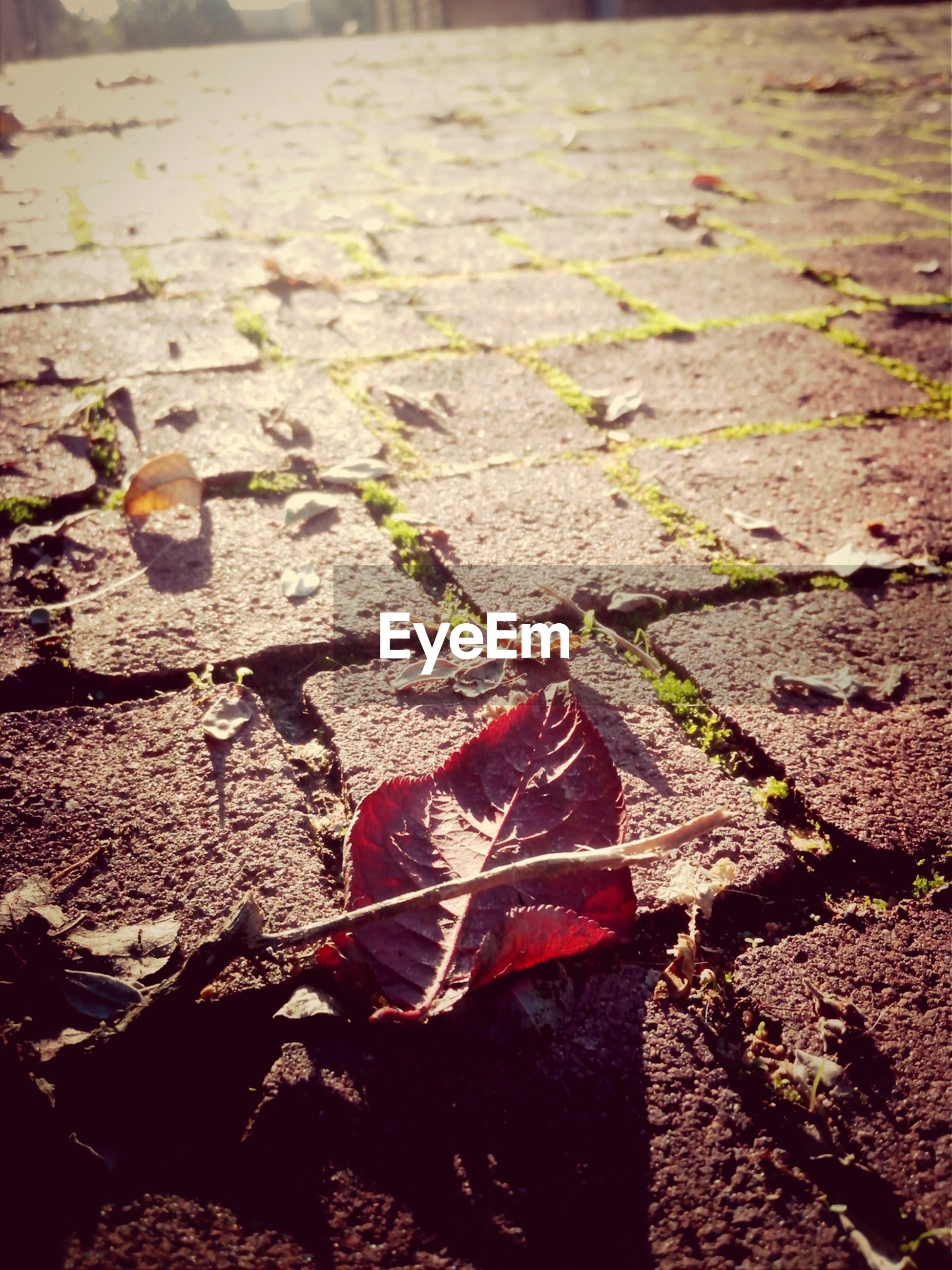 leaf, high angle view, autumn, nature, fallen, outdoors, dry, day, sunlight, close-up, change, red, ground, no people, street, textured, falling, leaves, plant, season