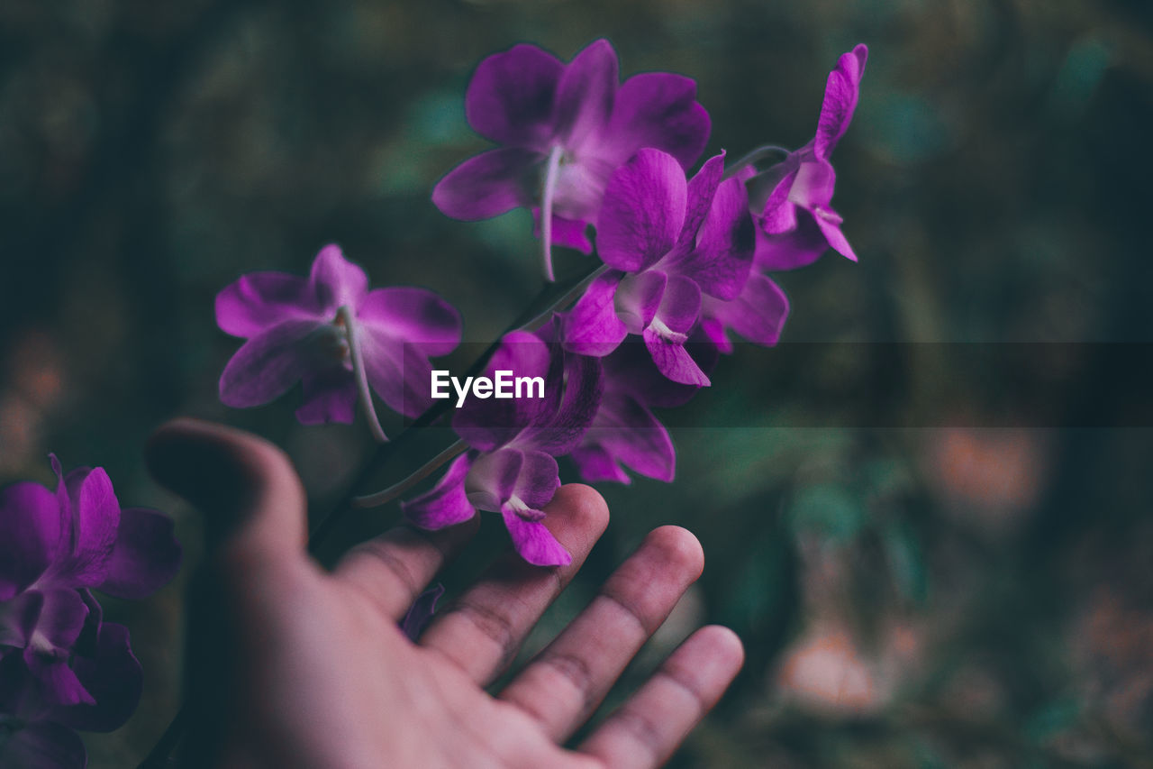 human hand, flower, flowering plant, vulnerability, fragility, hand, beauty in nature, freshness, human body part, petal, plant, close-up, nature, selective focus, purple, pink color, inflorescence, flower head, one person, real people, finger, outdoors, human limb