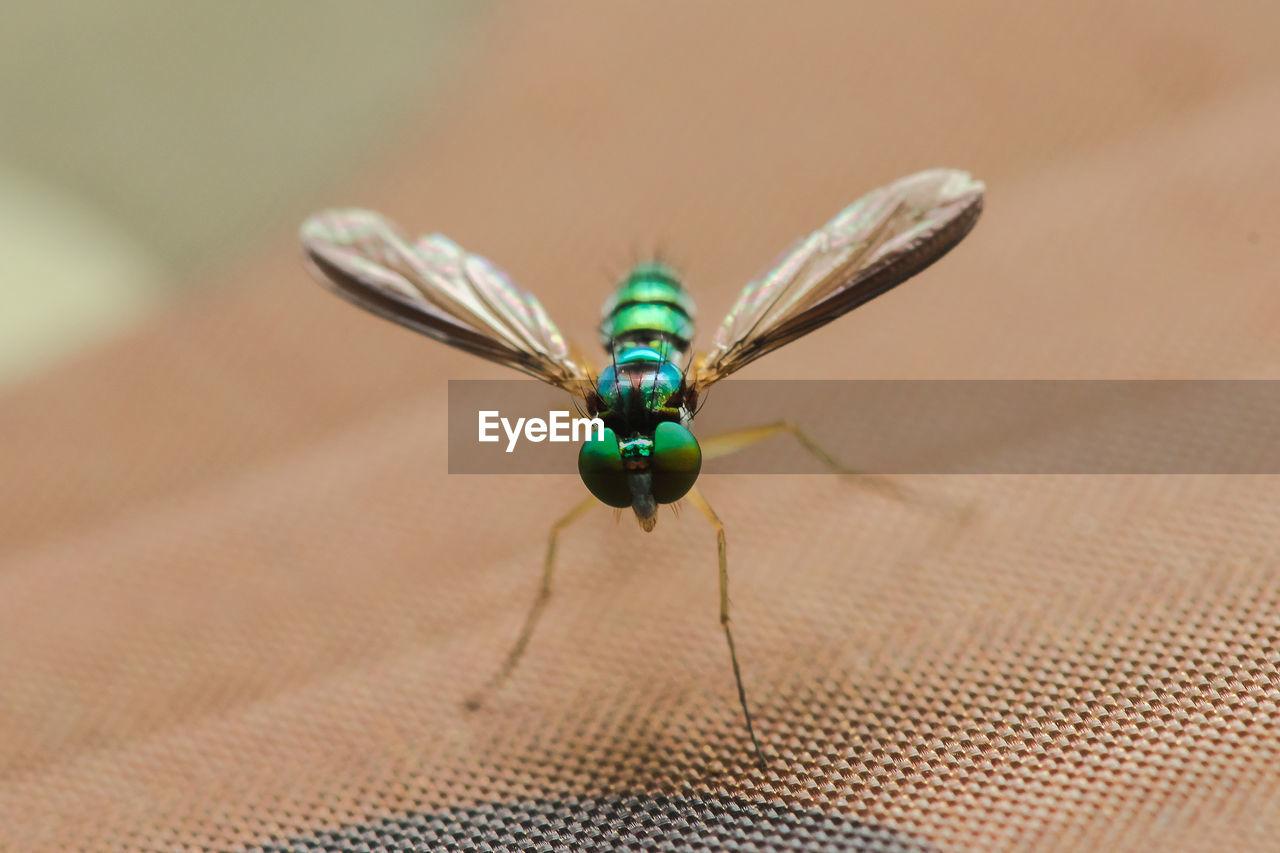 Dolichopodidae  live in the leaves