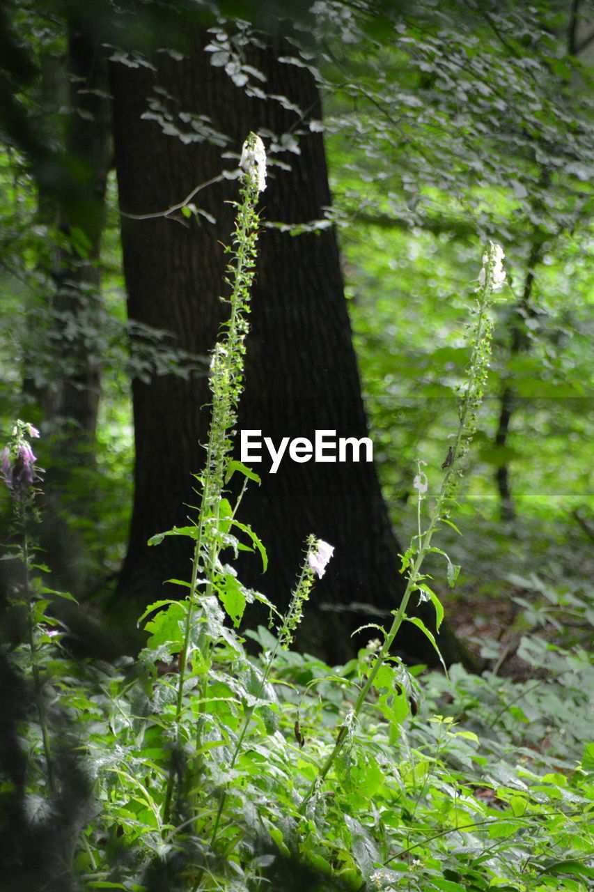 green color, growth, tree, plant, no people, nature, day, forest, outdoors, focus on foreground, leaf, close-up, tree trunk, beauty in nature