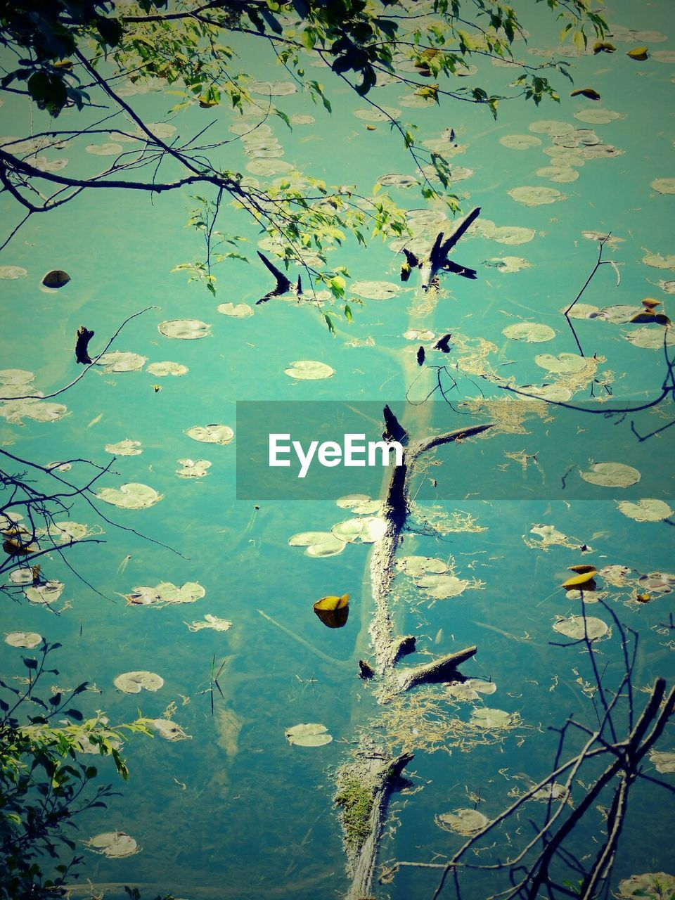 water, nature, lake, leaf, beauty in nature, growth, branch, no people, day, flower, outdoors, floating on water, tree, animals in the wild, plant, animal themes, lily pad, freshness, close-up, bird