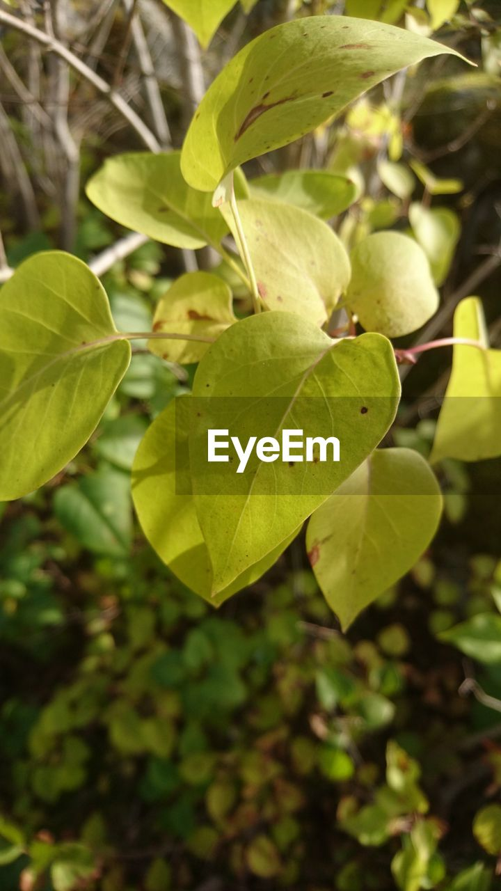 plant part, leaf, growth, plant, green color, close-up, beauty in nature, nature, no people, day, focus on foreground, outdoors, tree, freshness, selective focus, tranquility, high angle view, fragility, land, vulnerability, leaves
