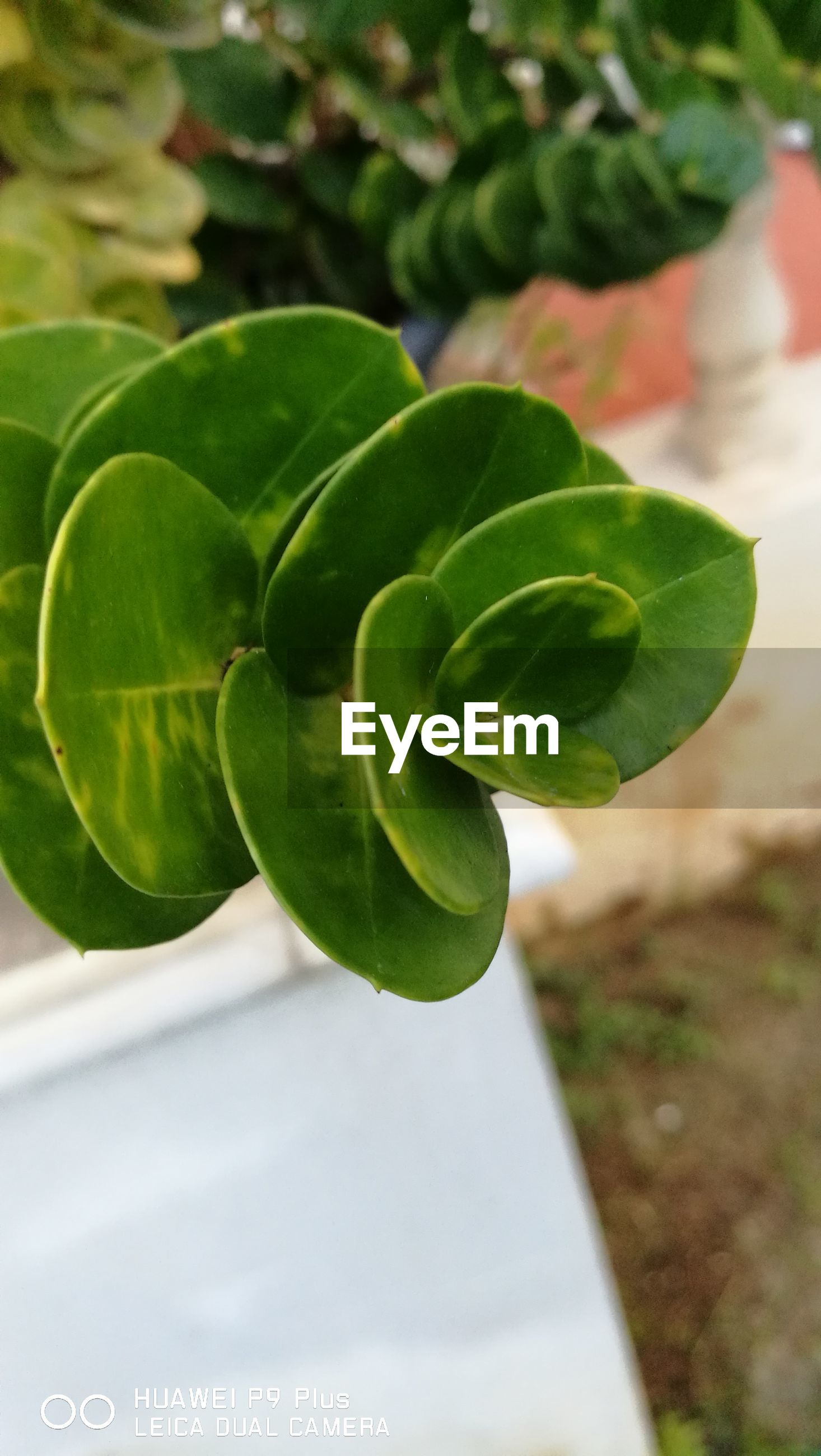 leaf, growth, plant, green color, nature, day, close-up, outdoors, no people, freshness, beauty in nature