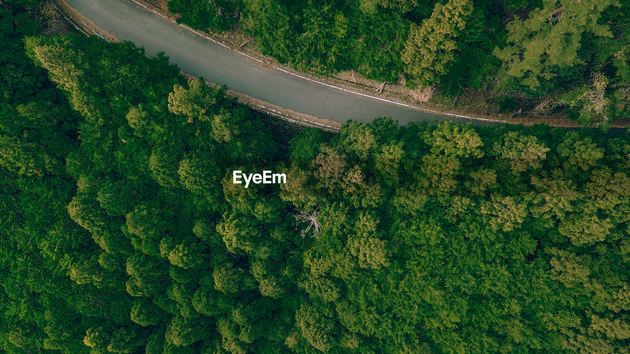 tree, aerial view, plant, green color, transportation, day, beauty in nature, high angle view, no people, scenics - nature, mode of transportation, nature, growth, land, environment, landscape, outdoors, road, air vehicle, non-urban scene