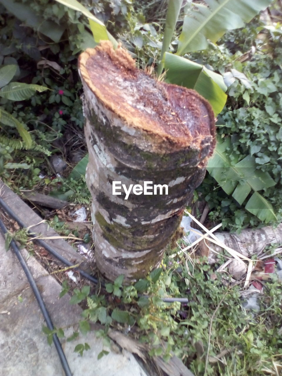 plant, growth, high angle view, nature, day, land, no people, close-up, plant part, leaf, outdoors, field, tree, forest, green color, wood - material, focus on foreground, selective focus, wood, tree trunk