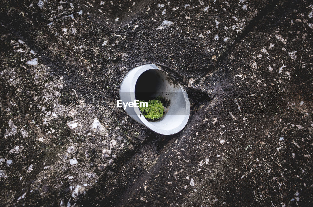High angle view of moss in pipe amidst wall