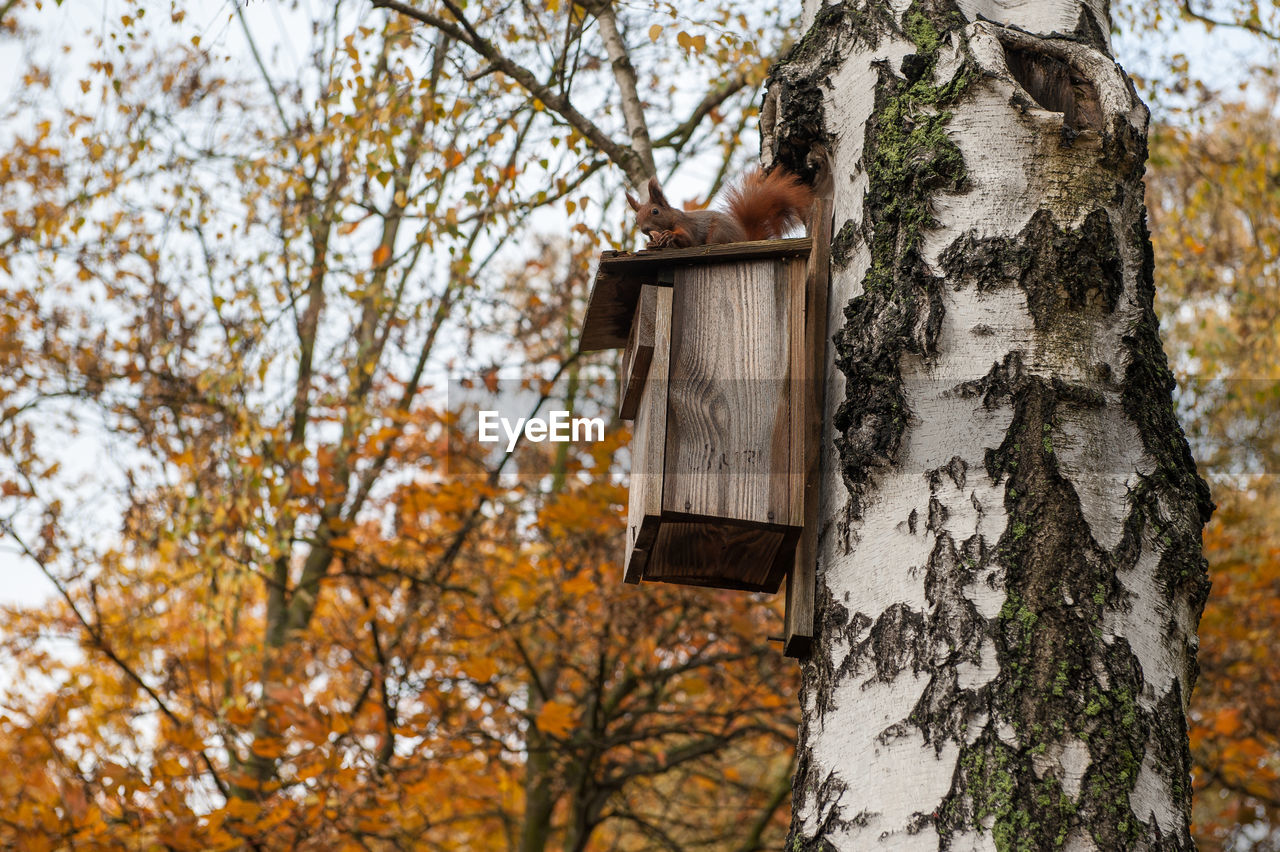 tree, plant, trunk, tree trunk, autumn, nature, day, focus on foreground, no people, branch, outdoors, change, birdhouse, growth, wood - material, hanging, springtime, low angle view, leaf, built structure, cherry blossom, cherry tree