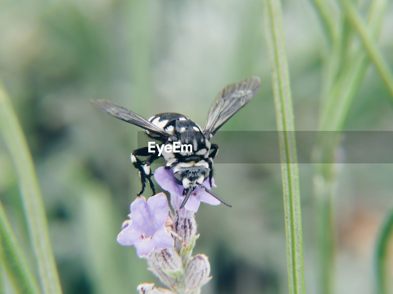 insect, animal themes, animal, animal wildlife, invertebrate, animals in the wild, one animal, flowering plant, flower, plant, beauty in nature, fragility, vulnerability, growth, close-up, animal wing, nature, focus on foreground, no people, day, pollination, flower head, purple, butterfly - insect