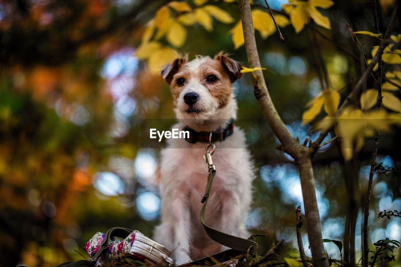 one animal, dog, canine, mammal, animal themes, animal, tree, plant, domestic, pets, domestic animals, vertebrate, looking at camera, focus on foreground, portrait, nature, no people, branch, day, low angle view, outdoors, change