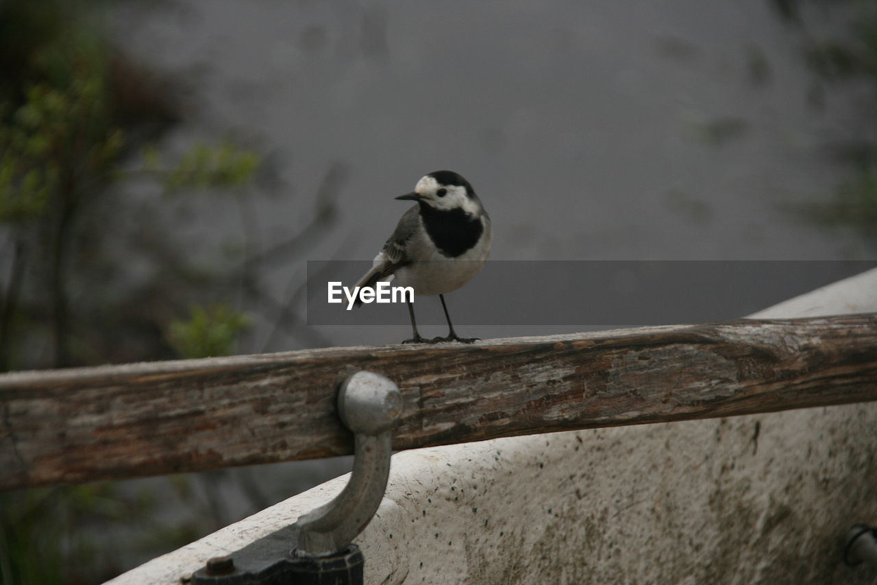 animals in the wild, one animal, animal themes, animal wildlife, bird, perching, focus on foreground, day, no people, outdoors, nature, close-up, great tit