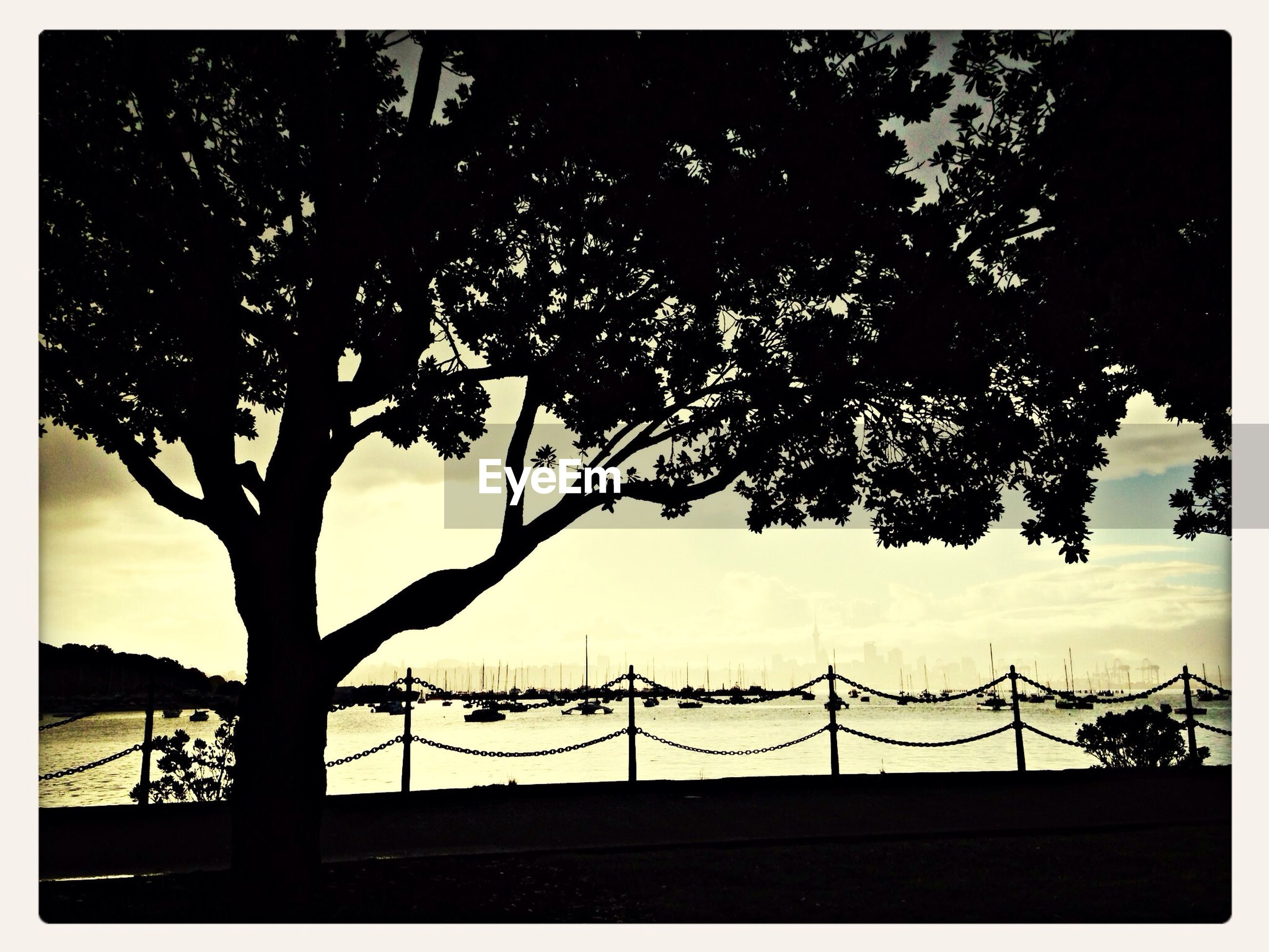 silhouette, transfer print, sky, tree, auto post production filter, low angle view, built structure, branch, architecture, sunset, nature, building exterior, railing, dusk, growth, no people, outdoors, connection, cloud - sky, fence