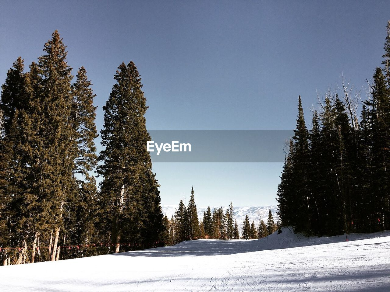 snow, winter, cold temperature, tree, plant, sky, beauty in nature, covering, nature, tranquility, clear sky, scenics - nature, growth, land, tranquil scene, no people, field, environment, white color, outdoors, pine tree, coniferous tree, snowcapped mountain