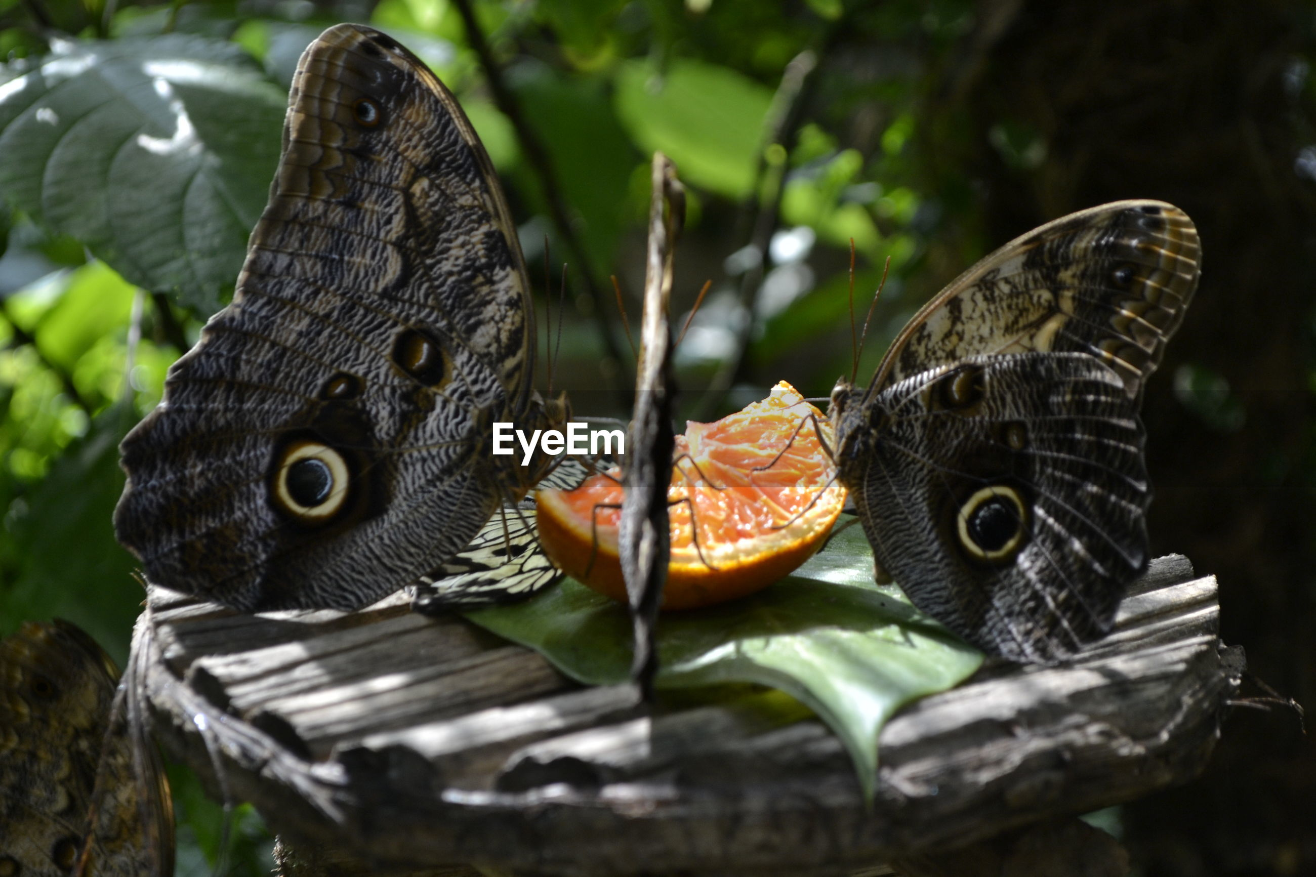 animal themes, animals in the wild, wildlife, one animal, close-up, focus on foreground, bird, animal markings, nature, beauty in nature, butterfly - insect, perching, two animals, natural pattern, outdoors, plant, day, side view, butterfly, no people