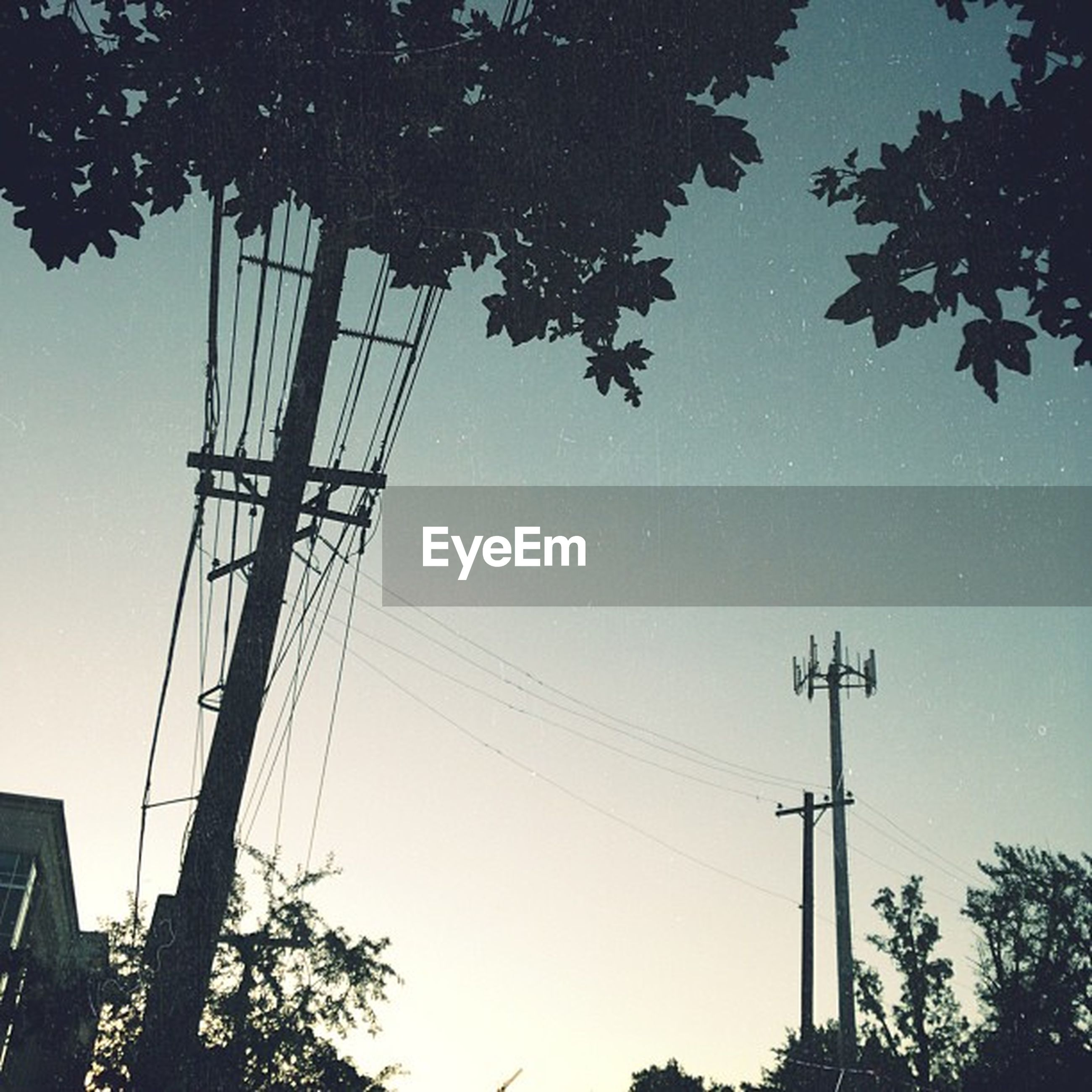 low angle view, tree, power line, electricity pylon, electricity, silhouette, power supply, clear sky, fuel and power generation, technology, connection, street light, cable, lighting equipment, sky, branch, blue, nature, dusk, outdoors