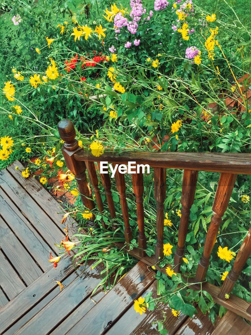 HIGH ANGLE VIEW OF FLOWERS IN YARD