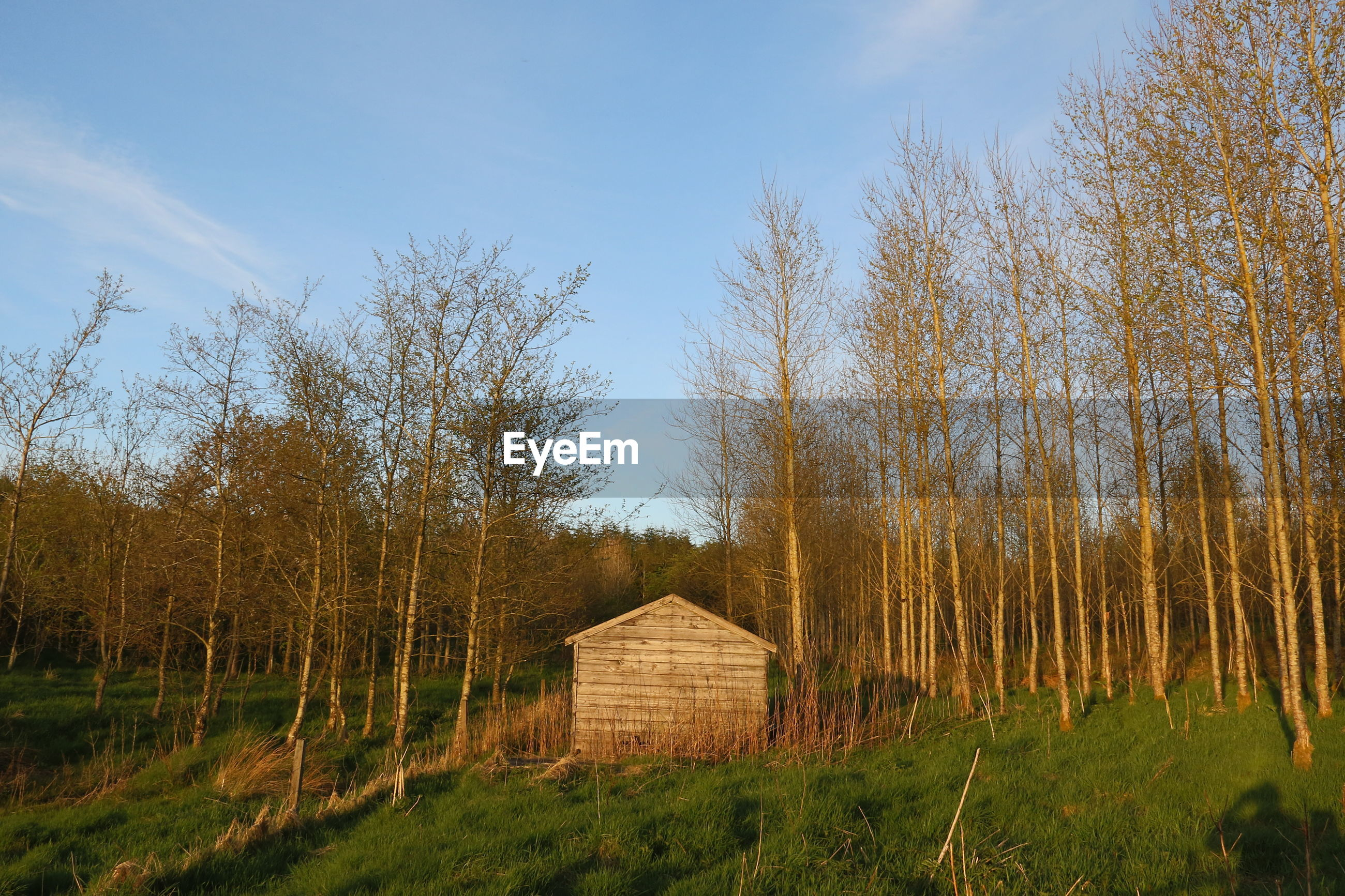 Trees and cabin in field against sky