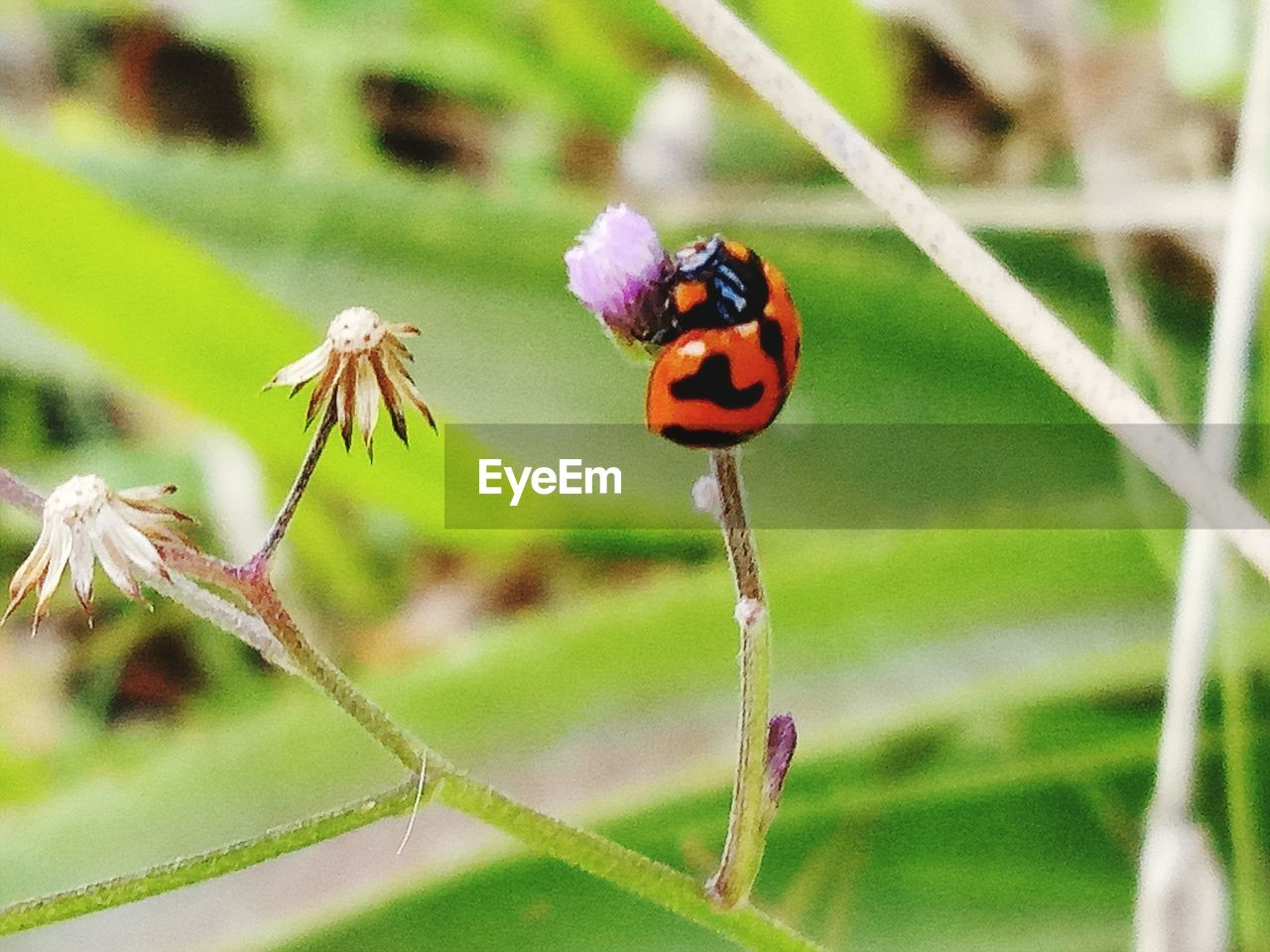 plant, flower, flowering plant, beauty in nature, insect, animal wildlife, focus on foreground, invertebrate, animal, animal themes, close-up, animals in the wild, vulnerability, fragility, one animal, nature, growth, plant stem, day, no people, outdoors, flower head, animal wing, pollination