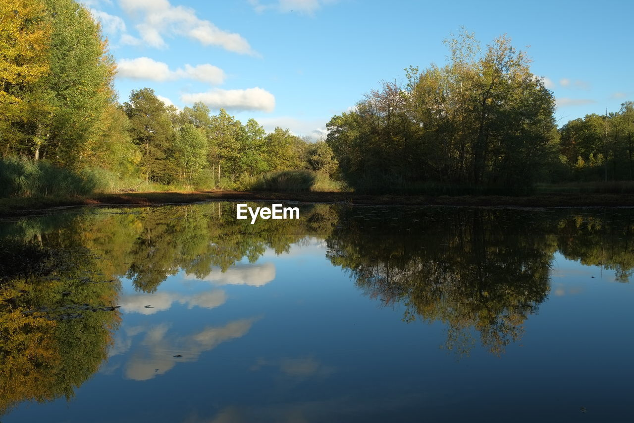 reflection, lake, tree, nature, water, tranquility, sky, tranquil scene, beauty in nature, outdoors, no people, scenics, day
