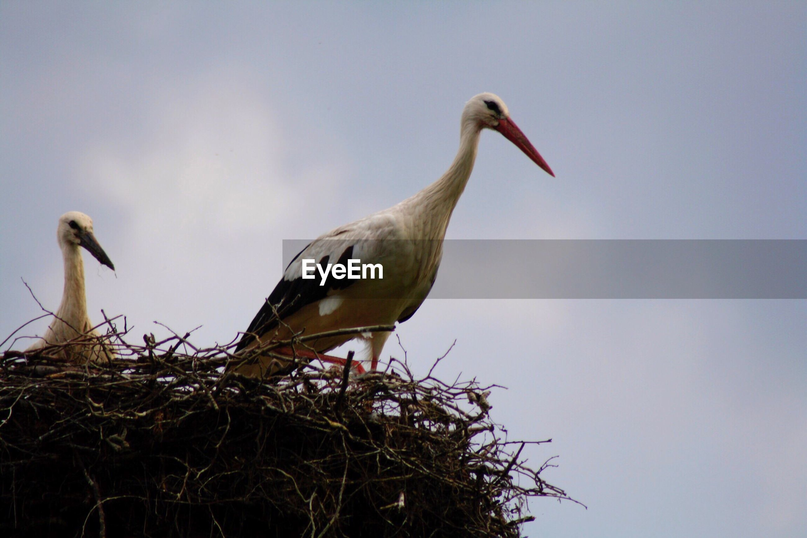 Low angle view of stork perching on plant against clear sky