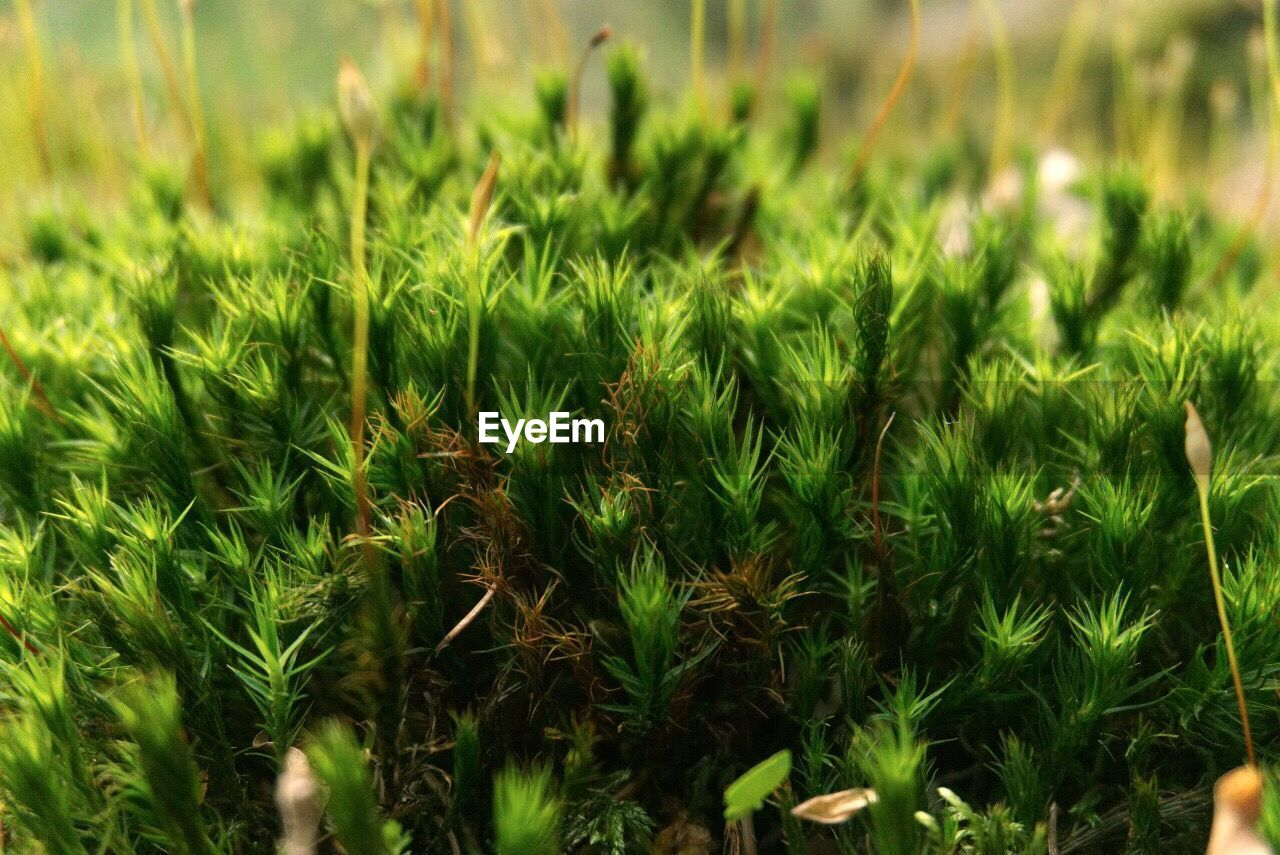 growth, green color, grass, nature, plant, field, no people, close-up, outdoors, day, beauty in nature