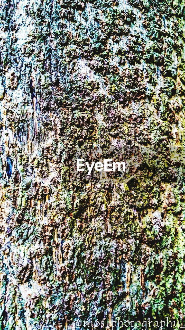 full frame, backgrounds, textured, abstract, pattern, moss, day, tree trunk, outdoors, close-up, bark, no people, nature, tree, lichen, growth