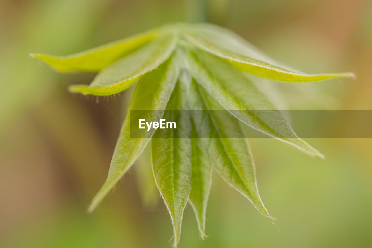 leaf, plant part, close-up, green color, plant, growth, beauty in nature, selective focus, no people, focus on foreground, nature, freshness, fragility, vulnerability, day, outdoors, beginnings, leaf vein, food, leaves, sepal