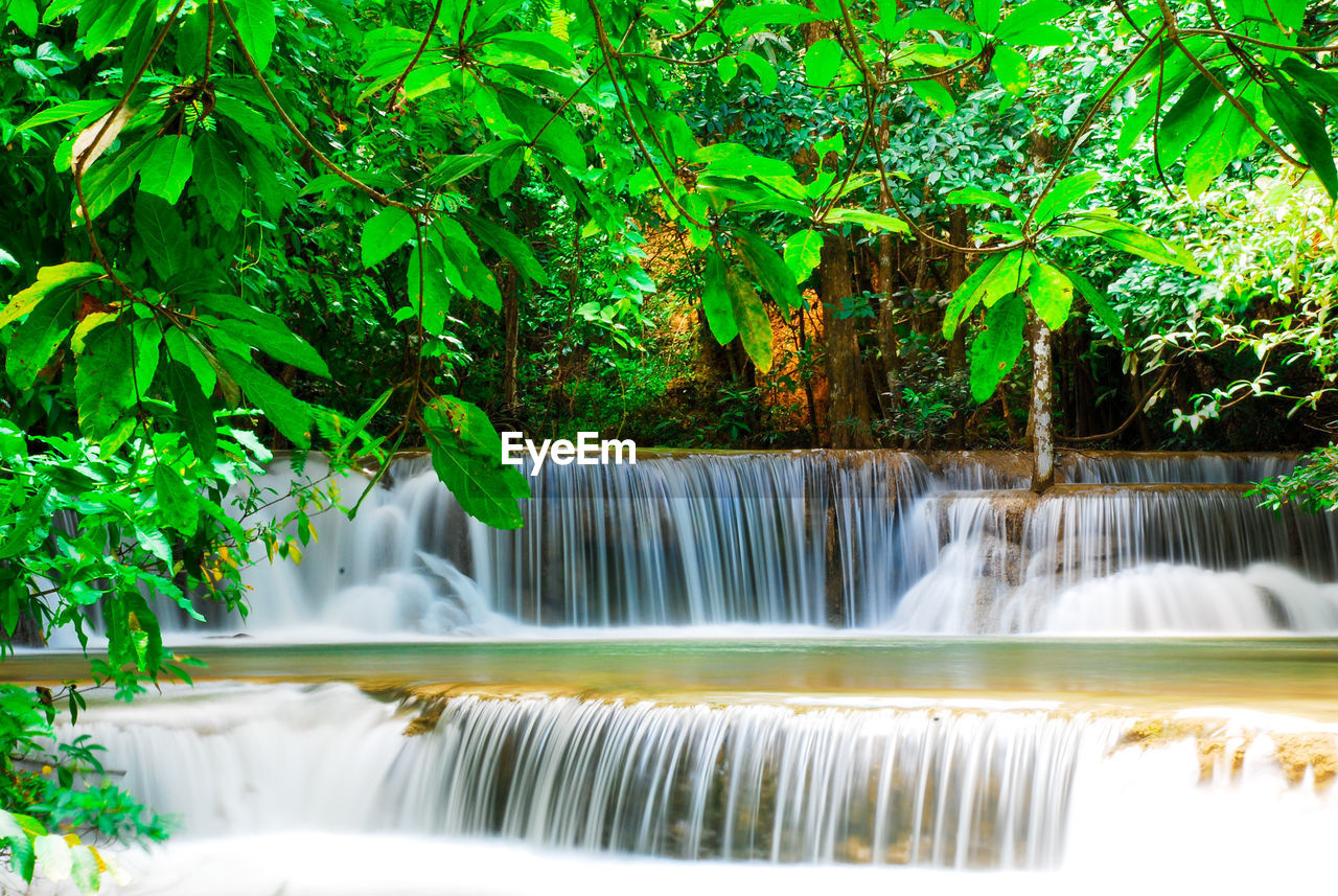 motion, water, waterfall, nature, beauty in nature, green color, long exposure, tree, leaf, growth, no people, plant, day, outdoors, scenics, freshness, close-up