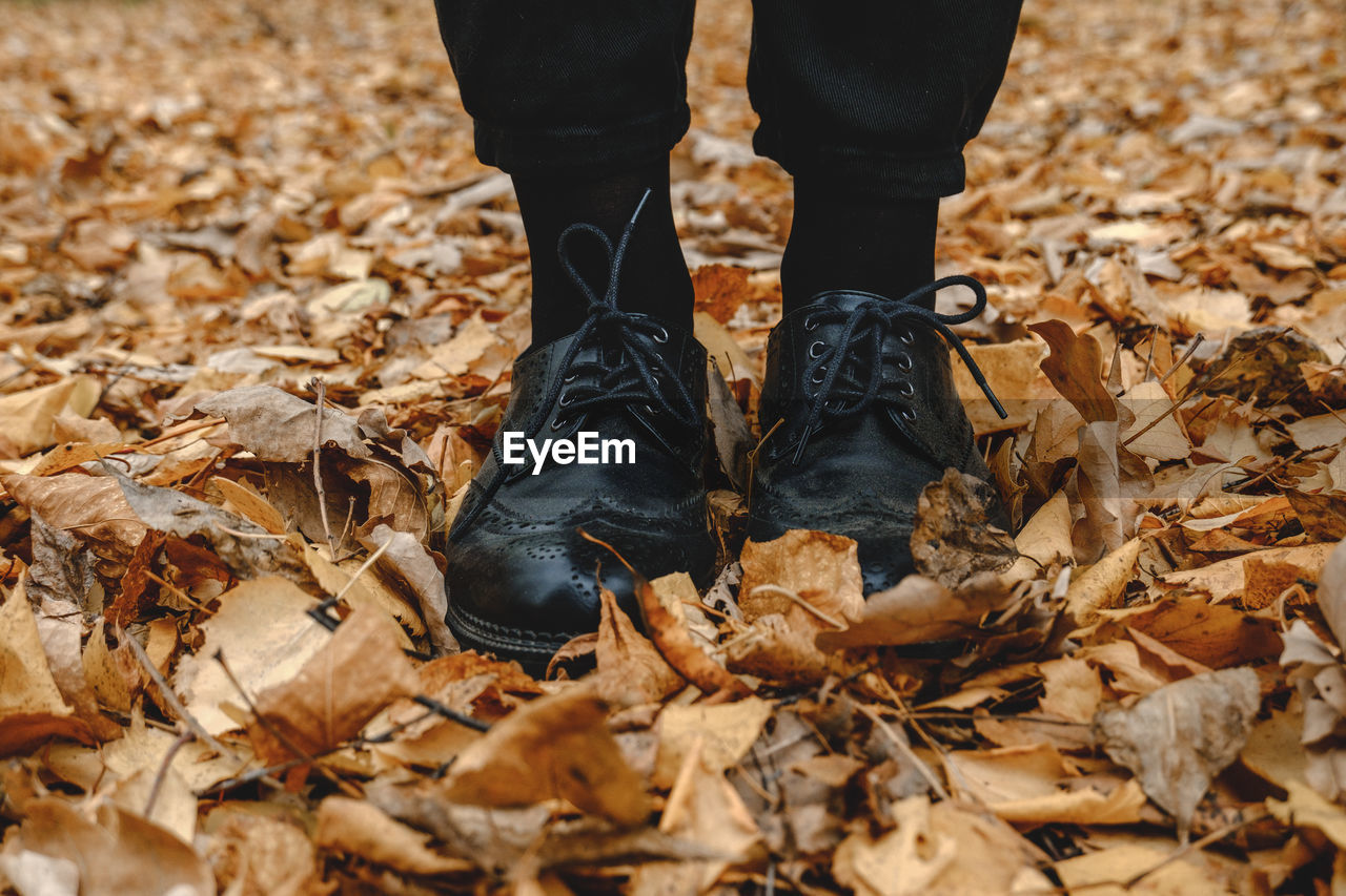 Low section of person standing by dry leaves on ground