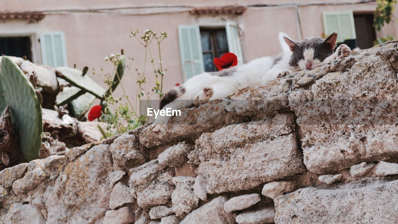 Cat resting on stone wall