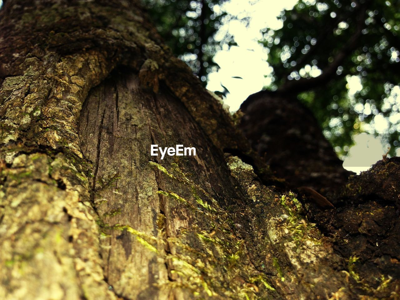 tree trunk, tree, textured, bark, rough, nature, growth, day, close-up, no people, outdoors, wood - material, low angle view, lichen, forest, fungus, beauty in nature