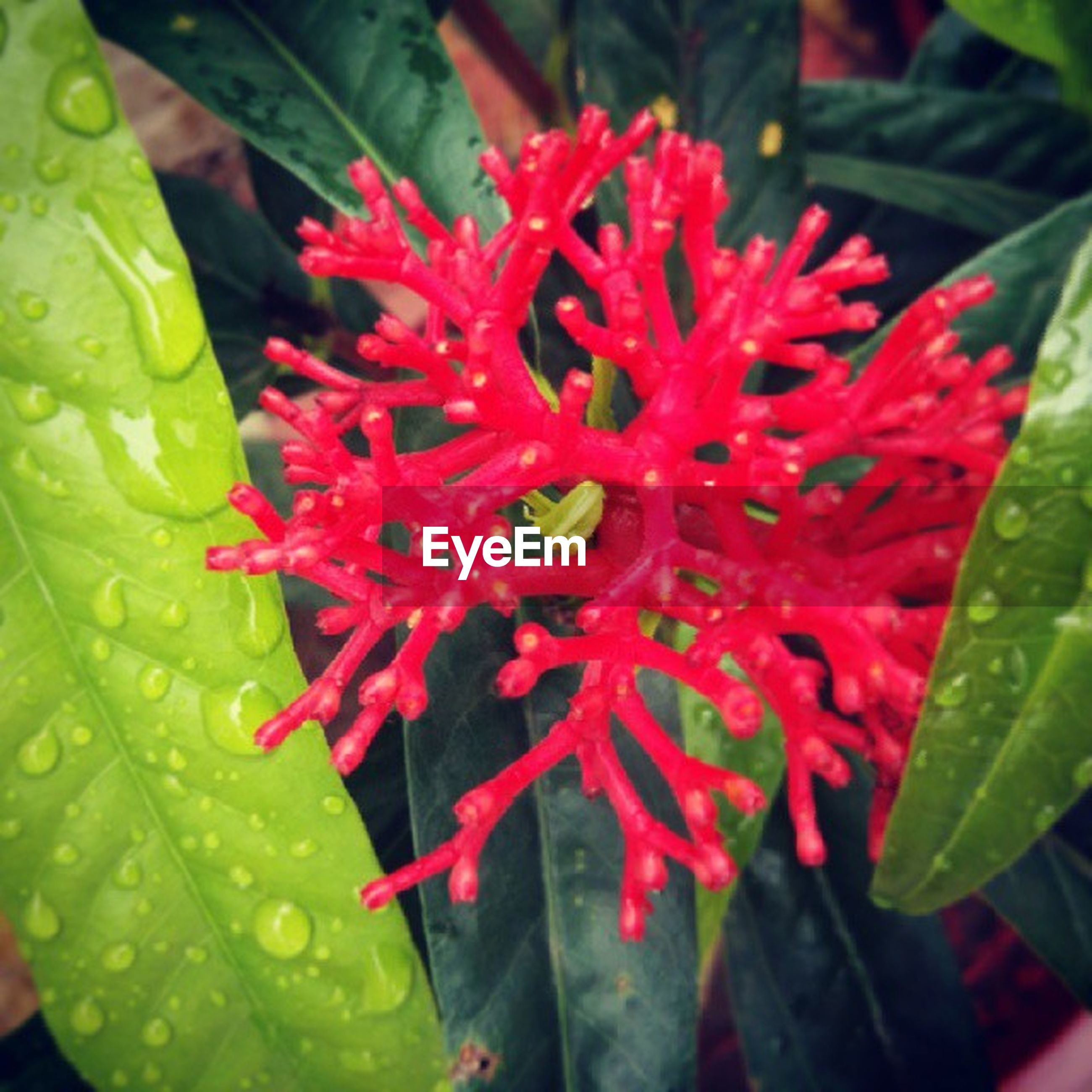freshness, leaf, flower, growth, water, fragility, petal, plant, beauty in nature, close-up, red, nature, flower head, drop, green color, wet, blooming, single flower, focus on foreground, high angle view