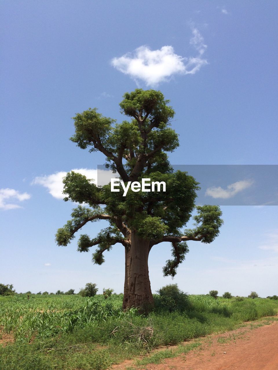 tree, growth, nature, sky, day, landscape, cloud - sky, scenics, field, no people, tranquility, beauty in nature, tranquil scene, outdoors, blue, green color, low angle view, plant, tree trunk, grass