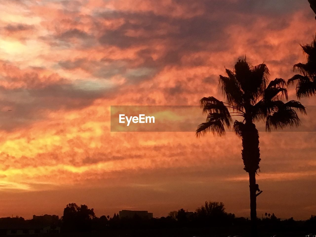 sunset, tree, silhouette, sky, orange color, beauty in nature, nature, dramatic sky, outdoors, cloud - sky, scenics, palm tree, no people, tranquility, tranquil scene, growth