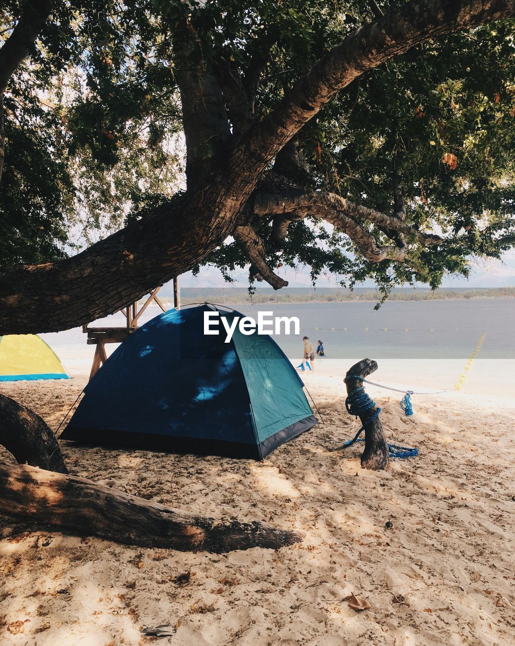 tree, real people, land, nature, day, people, leisure activity, plant, lifestyles, full length, men, child, sand, outdoors, childhood, tent, adventure, casual clothing, beach