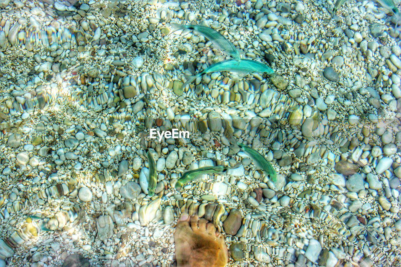 water, underwater, sea, animal wildlife, group of animals, undersea, animals in the wild, nature, sea life, animal, animal themes, fish, vertebrate, swimming, large group of animals, marine, invertebrate, one person, beauty in nature, outdoors, school of fish, turquoise colored