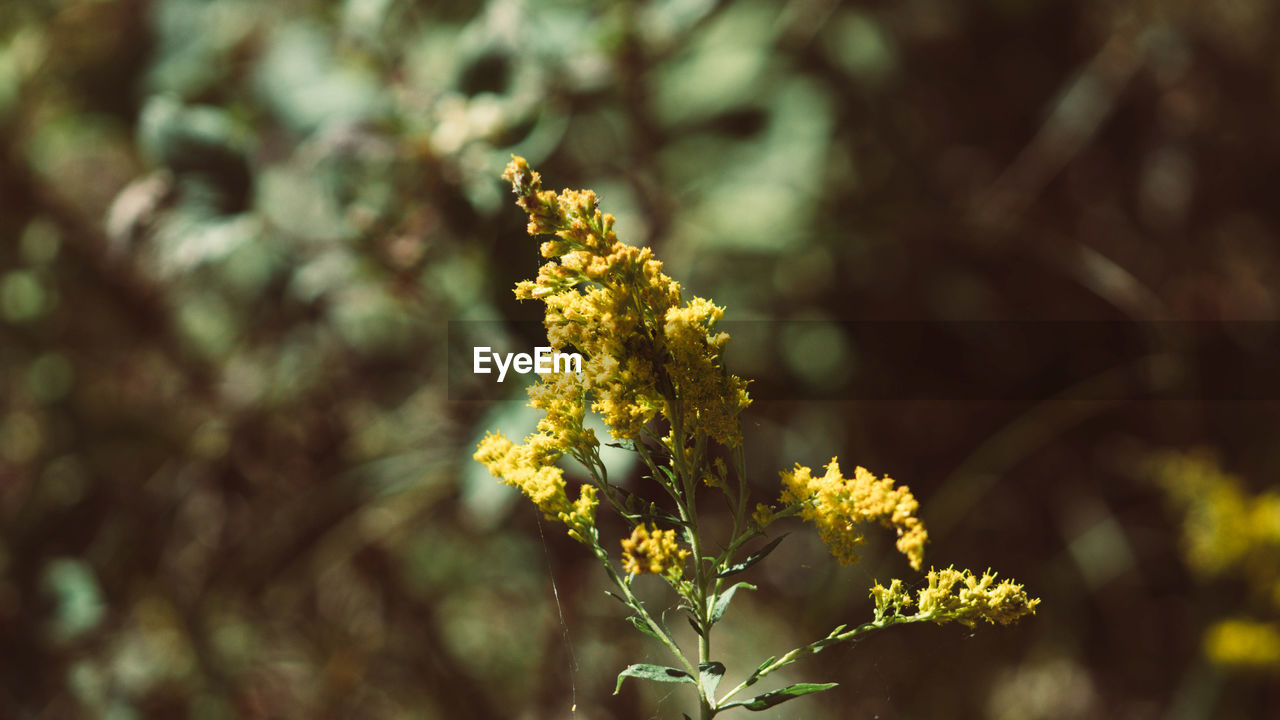 flower, flowering plant, plant, growth, fragility, beauty in nature, vulnerability, freshness, close-up, yellow, day, nature, selective focus, focus on foreground, no people, outdoors, petal, flower head, inflorescence, sunlight