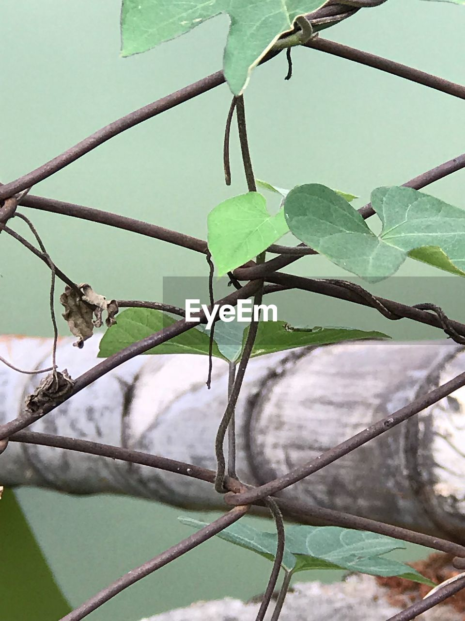plant, leaf, plant part, no people, animal themes, nature, animal, green color, animal wildlife, close-up, branch, growth, tree, animals in the wild, day, one animal, focus on foreground, outdoors, plant stem, protection