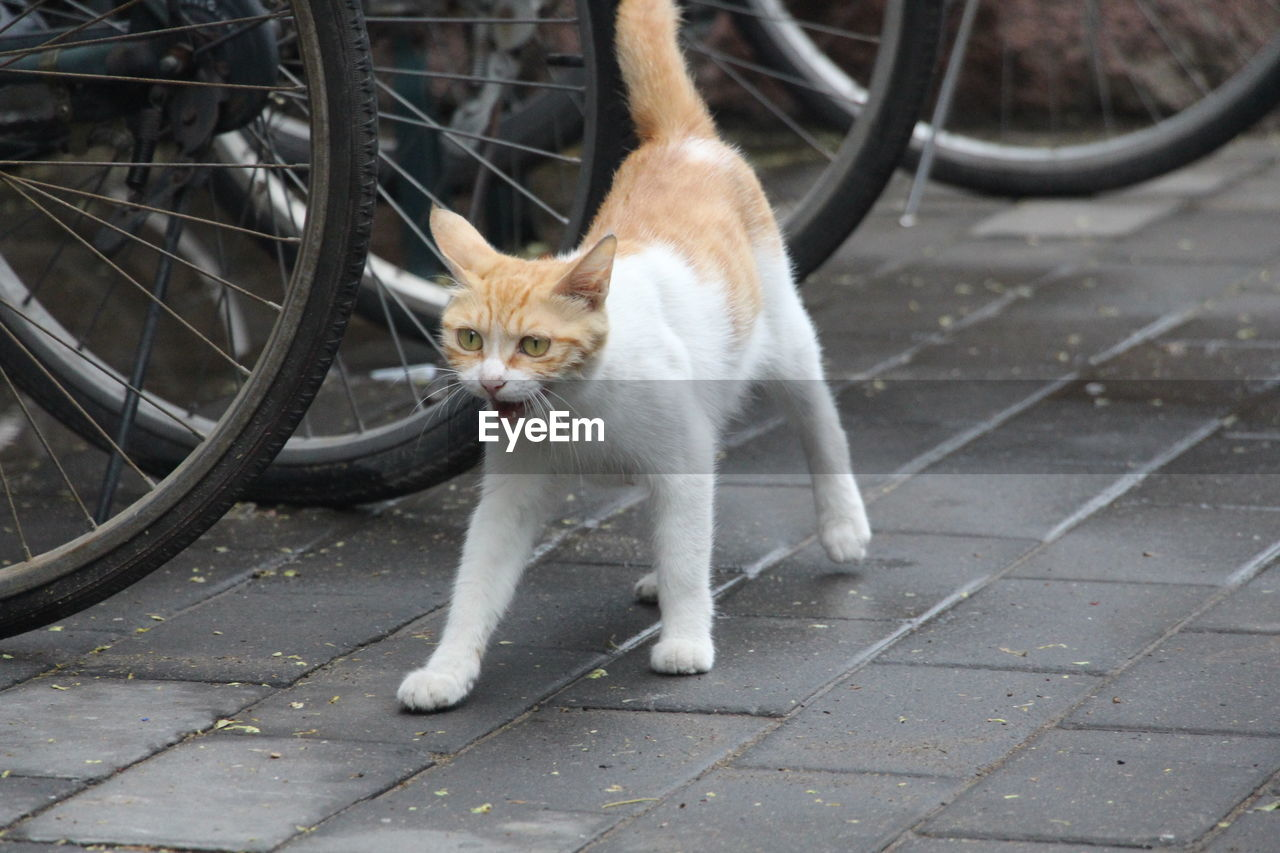 Cat Next To Bicycle