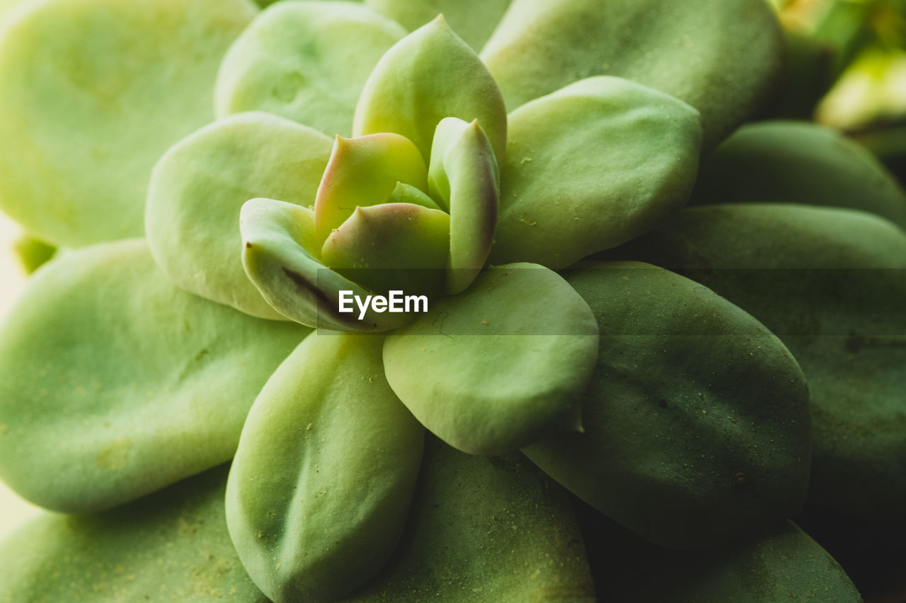 green color, food and drink, freshness, food, no people, close-up, wellbeing, healthy eating, full frame, vegetable, backgrounds, fruit, focus on foreground, day, still life, raw food, green, seed, group of objects, large group of objects