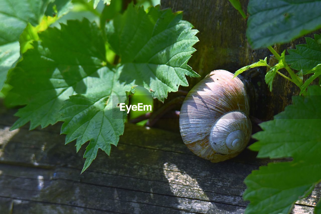 leaf, plant part, close-up, snail, green color, plant, mollusk, animal wildlife, gastropod, shell, invertebrate, nature, animal shell, no people, animal, animal themes, day, growth, animals in the wild, wood - material, outdoors, leaves
